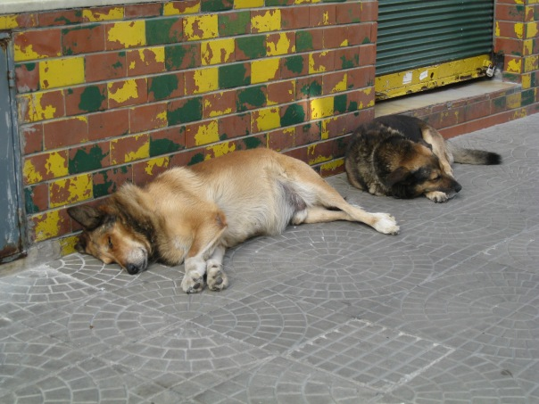 These dogs were obviously done for the day. Taking a nap.