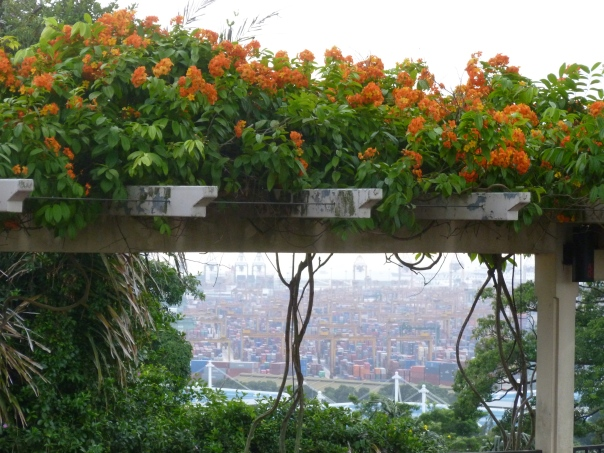 There were some lovely bright orange flowers along the walk, and I thought it was neat to see that framing a view of the massive port operation down below that has been so critical to Singapore's history.